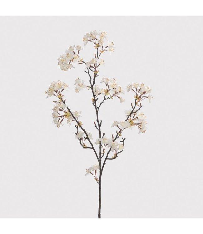 White/Cream Almond Blossom