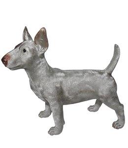 Samson the Bull Terrier