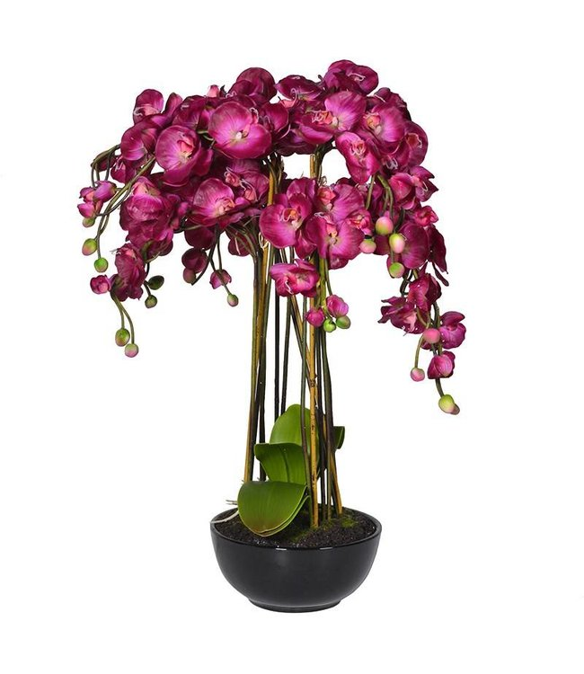 Purple Orchid In Pot