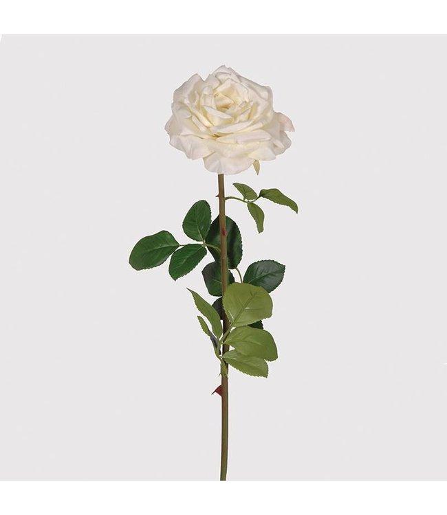 Cream French Rose