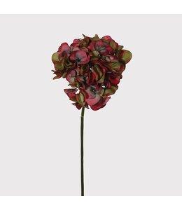 Ruby Olive Hydrangea