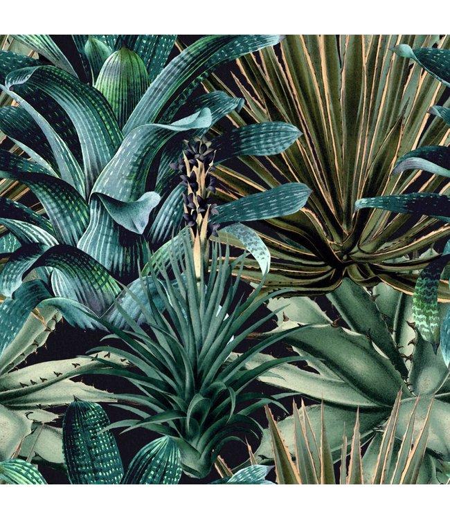 MIND THE GAP Lush Succulents