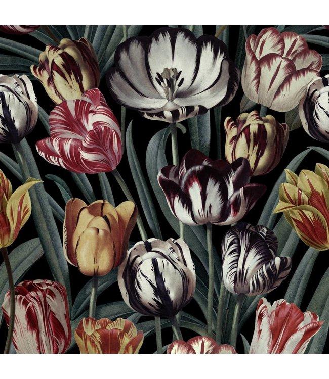 MIND THE GAP Tulipa Dark