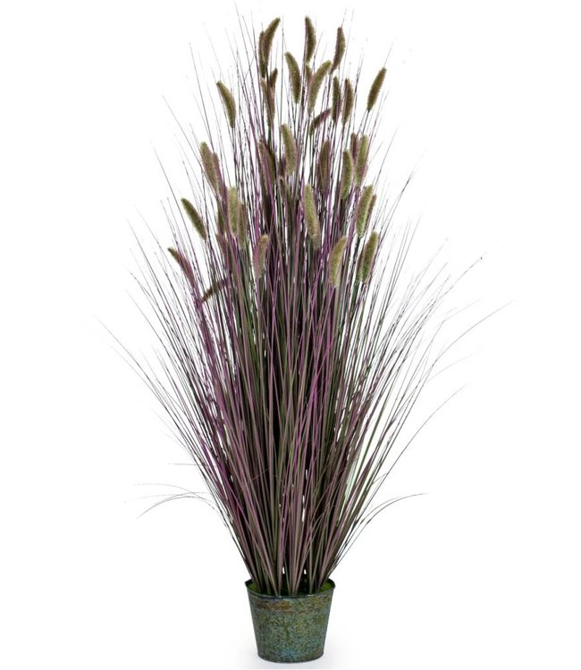 McGowan & Rutherford Ornamental Grasses in Galvanised Pot