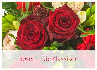 Rosen pur