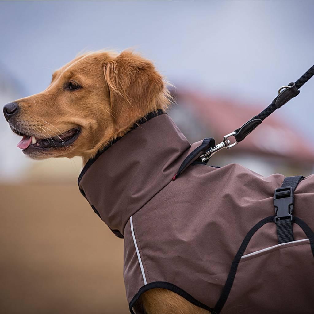 Hunde cape für die Aktivitäten