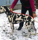 Helsitar® Bademantel für Hunde hell-lila