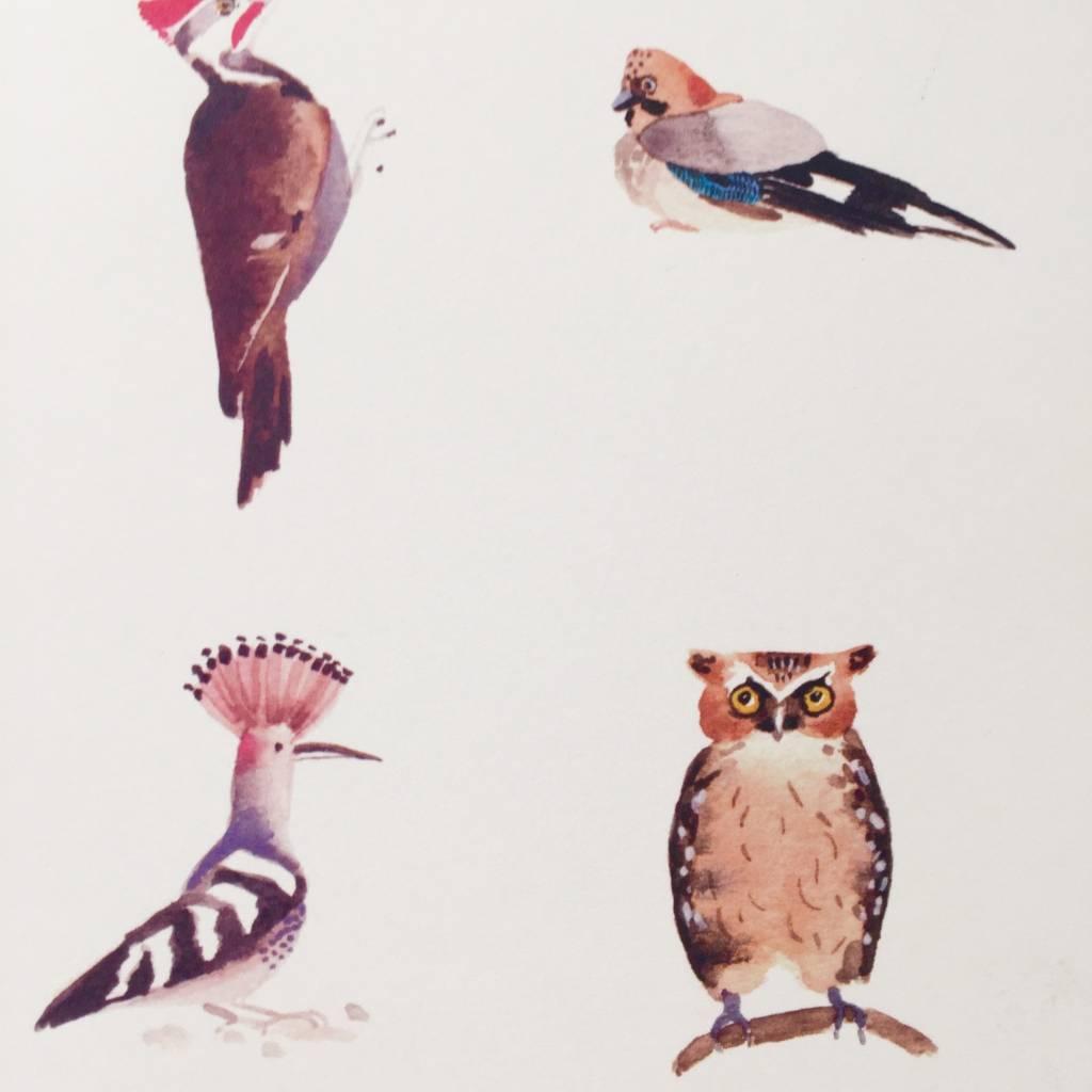 JOUJOU squirrel birds poster a4