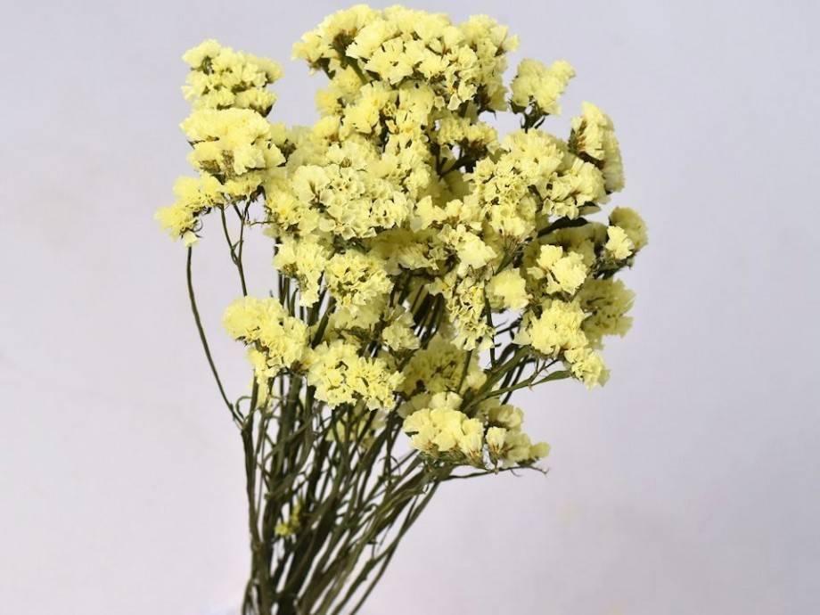 Dried flowers yay df statice sinuata yellow 45 cm mightylinksfo