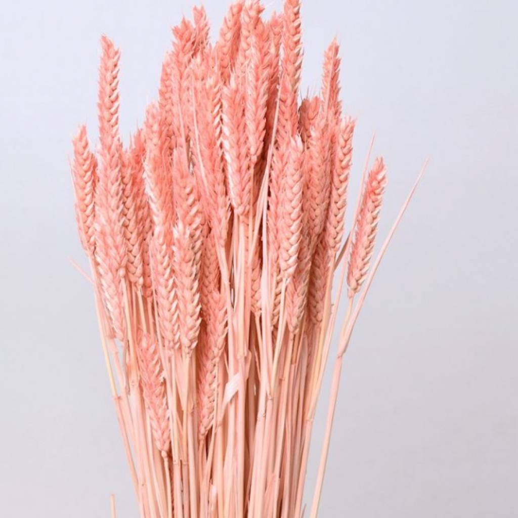 DF wheat pastel peach 70 cm