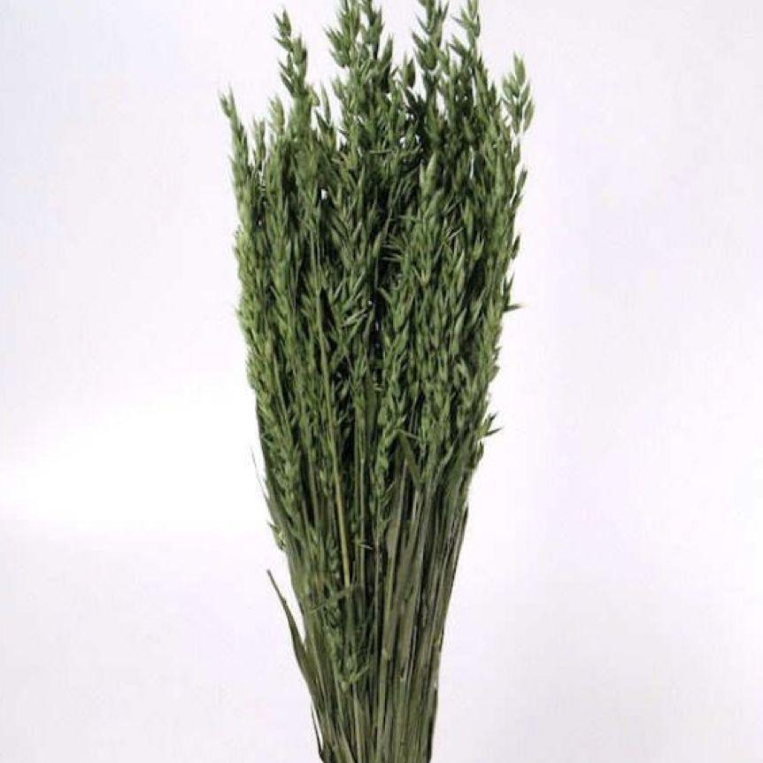 DF oats green 70 cm