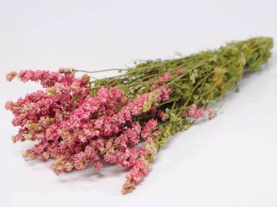 DF Delphinium pink 65cm