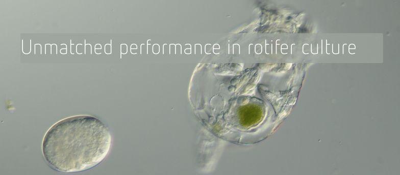 Rotifer culture
