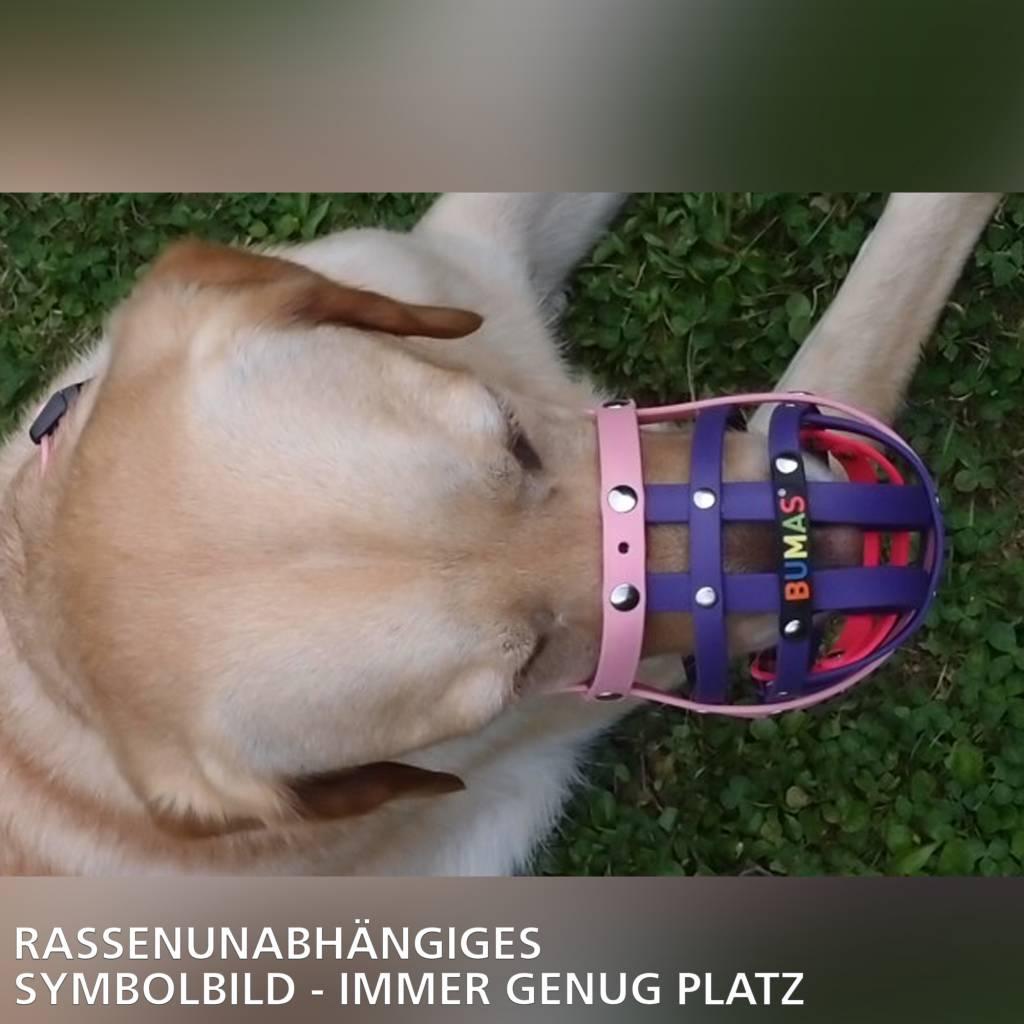 BUMAS - das Original. BUMAS bozal a medida de BioThane® para un Labrador, negro/naranja neón