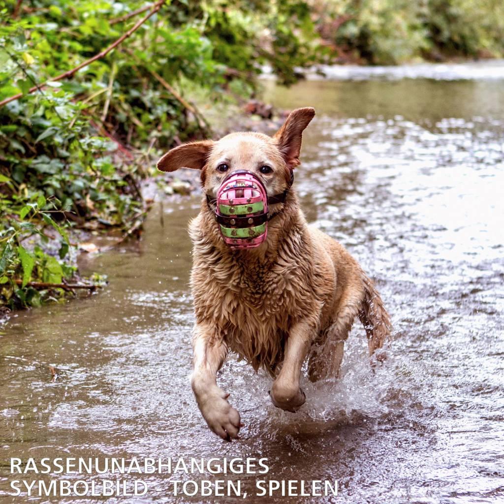 BUMAS - das Original. BUMAS bozal a medida de BioThane® para un American Staffordshire Terrier, marrón/negro
