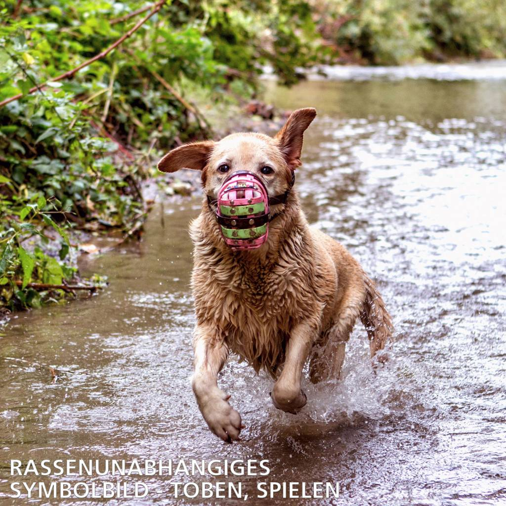 BUMAS - das Original. BUMAS Maulkorb für American Staffordshire Terrier, BioThane®, braun/schwarz