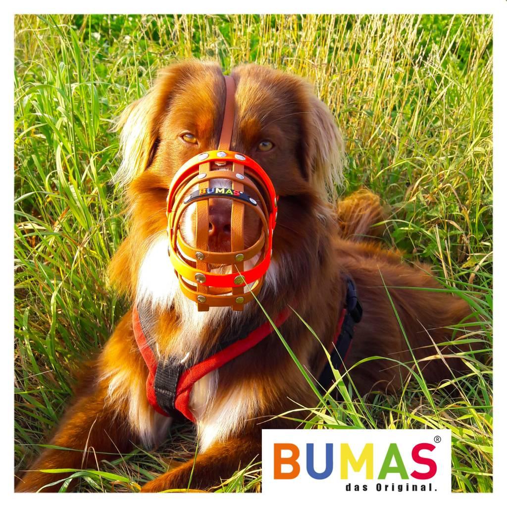 BUMAS - das Original. BUMAS Muzzle for Australian Shepherds made of BioThane®, brown/black