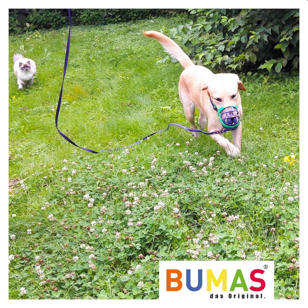 BUMAS - das Original. BUMAS - sport - BioThane® Schleppleine in neongelb