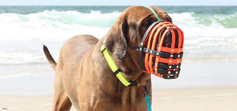 HERVORRAGEND lautet das Testurteil von Hundemagazin.net für BUMAS