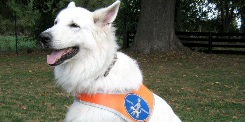 Mehr als nur Augen die für mich sehen - mein Blindenhund