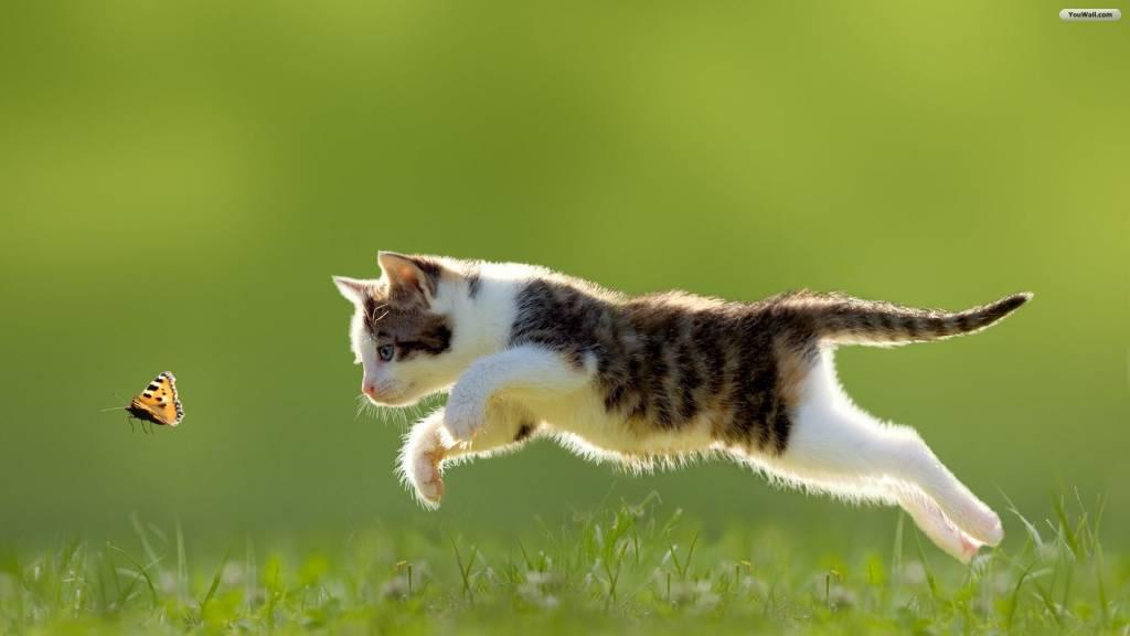 Vanaf hoe hoog kan een kat naar beneden kan springen (zonder iets te mankeren)?