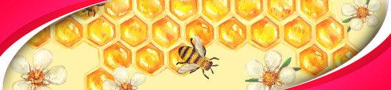 Honig - Honey - Med