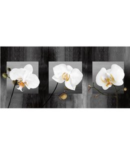 Ingelijste Posters: Witte orchideen