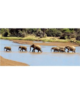 Ingelijste Posters: Olifanten in het meer