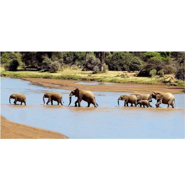 Kunstzinnige Ingelijste Posters: Olifanten in het meer