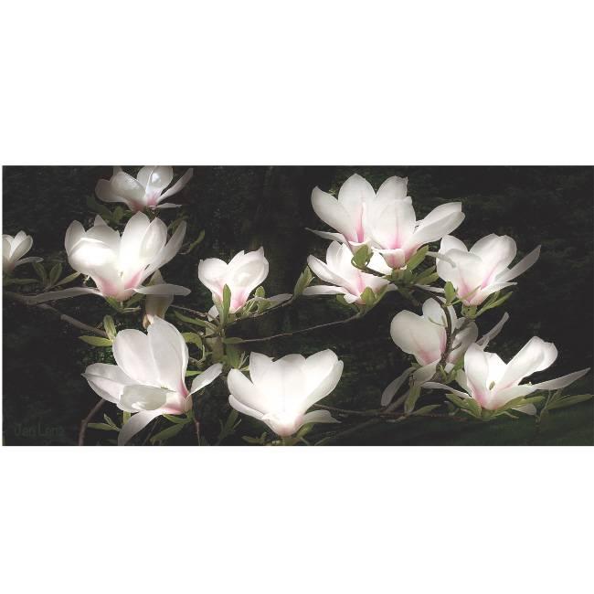Kunstzinnige Ingelijste Posters: Bloemen Witte Magnolia