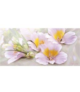 Ingelijste Posters: Witte bloemen in bloei