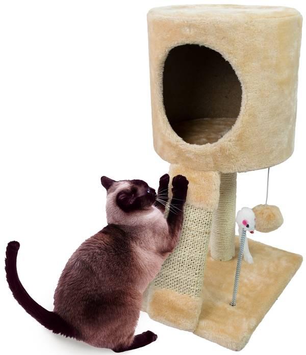 Kattenspeelset