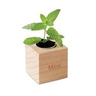 Menta kweekset in houtenpot