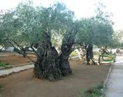 Diverse bomen/struiken