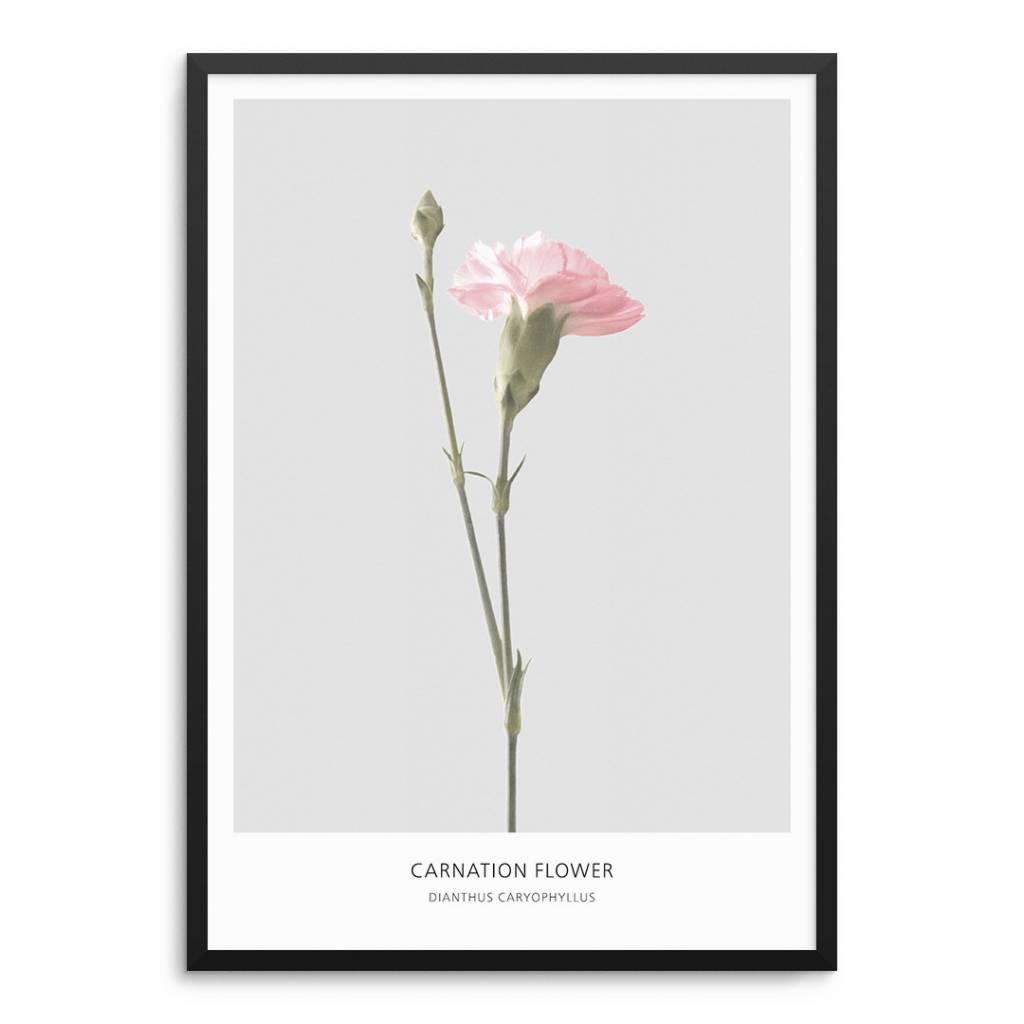 Lovely Bird Carnation Flower Poster