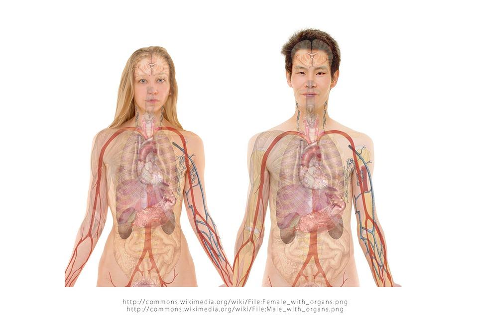 Runsupplies hart en longen