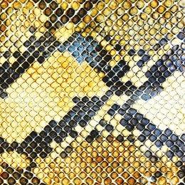 Amazing Snakeheads - Amphetamine Ballads