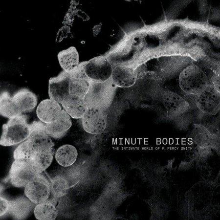 Tindersticks - Minute Bodies (LP-Vinyl)