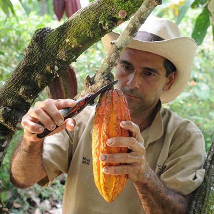 - Nicht alkalisiertes 100% Kakaopulver mit 20/24% Fettgehalt – Colombian Origin, 1kg
