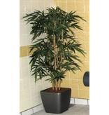 Bamboe opgepot in kunststof pot   150cm