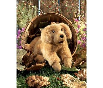 Handpop Golden retriever pup