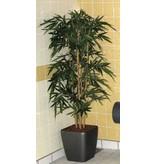 Bamboe deluxe opgepot in kunststof pot   210cm