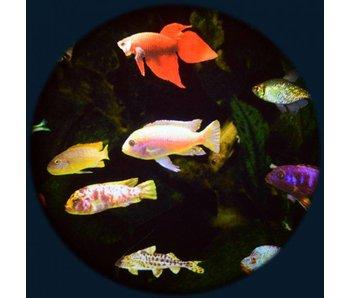 """Effectwiel groot 9"""" thema:  Aquarium"""