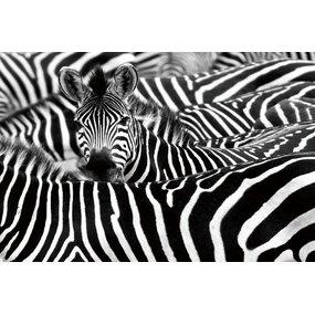 Zebra's (120x80cm)