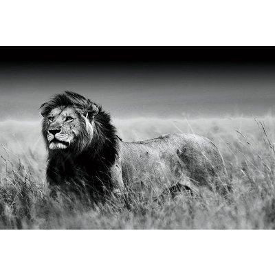 Zwart-wit foto op glas 'leeuw'