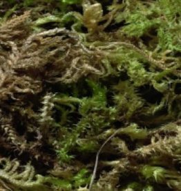 Sisal fibre Sisal Fibre MOSS 500 gr