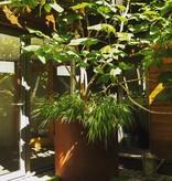 Cortenstaal Plantenbak Rond
