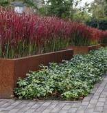 Cortenstaal Plantenbak Rechthoek