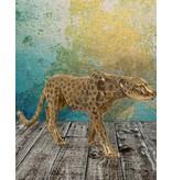 Moyenne Aristea – Goldfarbener Gepard