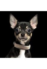 Milk & Pepper Hundehalsband Boreal Taupe Beige/Gold Strass Milk & Pepper